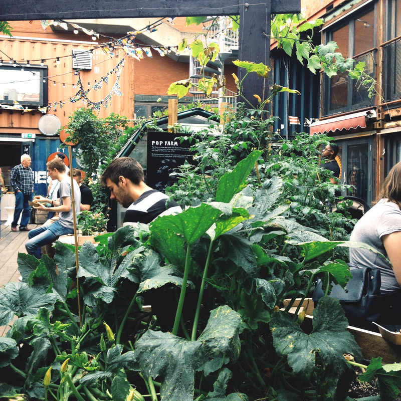 Urban Garden in brixton london